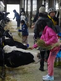 牛の餌やりも初体験