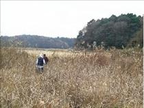 2008年当時の荒れた休耕田