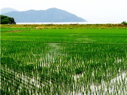 田んぼから琵琶湖を望む