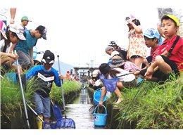 用水路の魚観察会