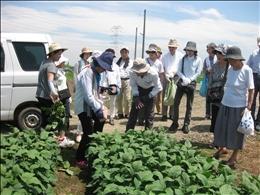枝豆の収穫体験