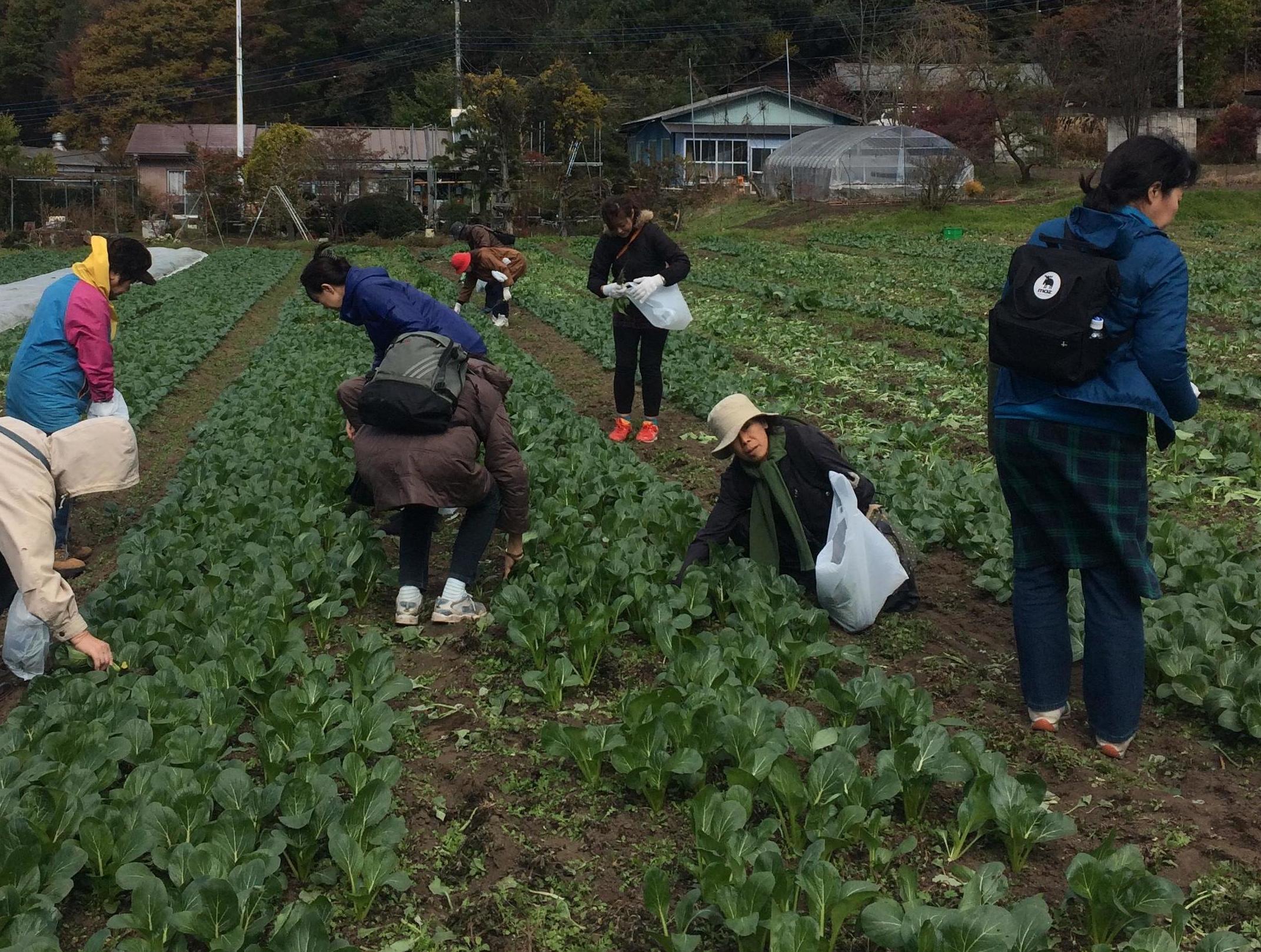 やさいの収穫体験